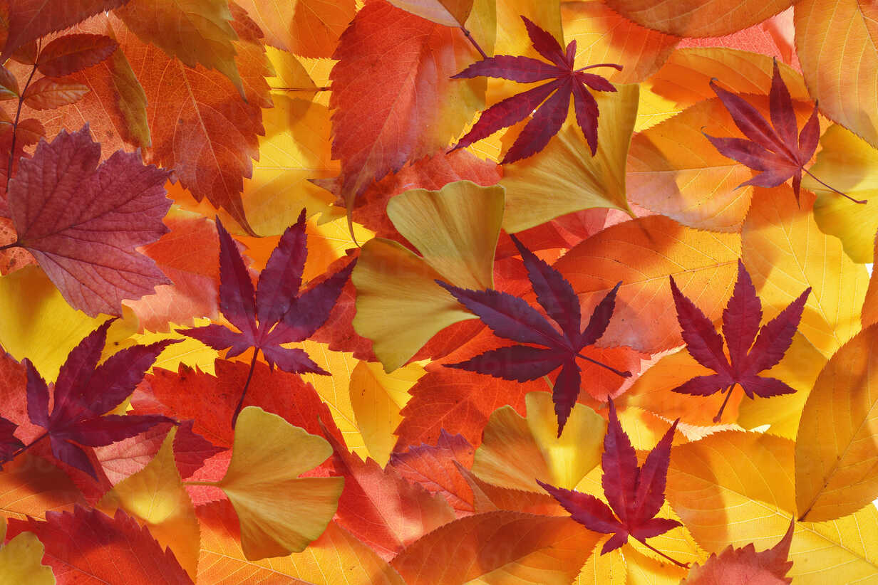 Autumn leaves of different trees - RUEF001721 - Martin Rügner/Westend61