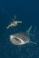 Indonesia, Cenderawasih Bay, Whaleshark and snorkeler - TOVF000053