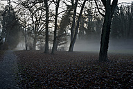 Germany, Sigmaringen, early morning fog in the garden of the prince in winter - AXF000780