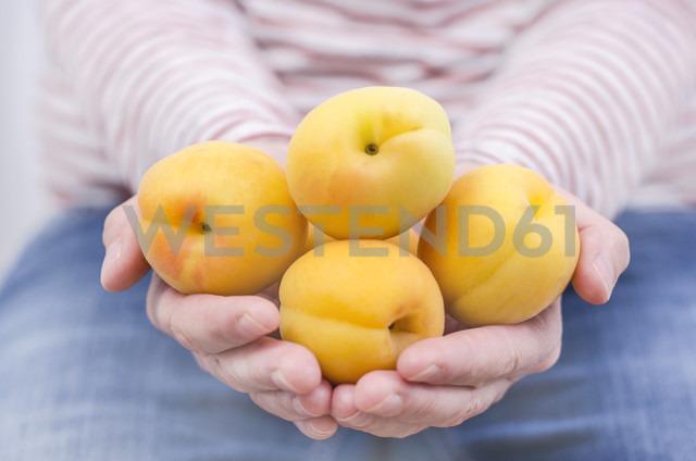 Woman's hands holding flat apricots - ODF001392 - Doris.H/Westend61