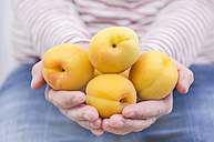 Woman's hands holding flat apricots - ODF001392