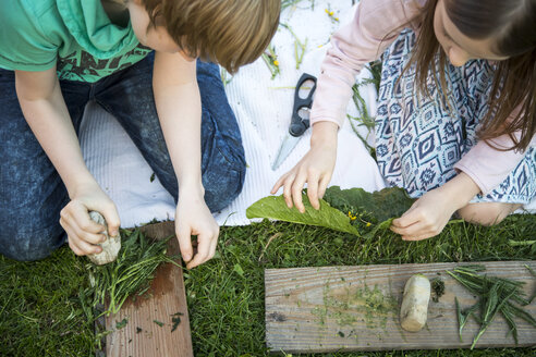 Brother and his little sister playing 'cooking' with herbs on a meadow - SARF002730