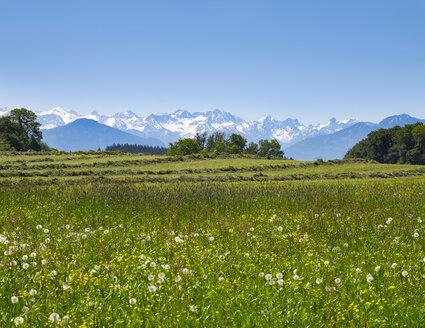 Germany, Bavaria, Upper Bavaria, Fuenfseenland, Alpine foothills, Karwendel, flower meadow - SIEF007029