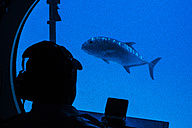Underwater view in a submarine - NG000329