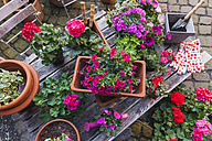 Gardening, different spring and summer flowers, gardening tools on garden table - GWF004719