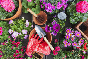 Gardening, different spring and summer flowers, gardening tools on garden table - GWF004722