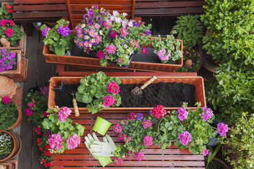 Gardening, different spring and summer flowers, flower box and gardening tools on garden table - GWF004725