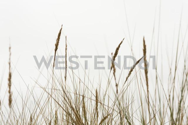 Marram grasses - NGF000338 - Nadine Ginzel/Westend61