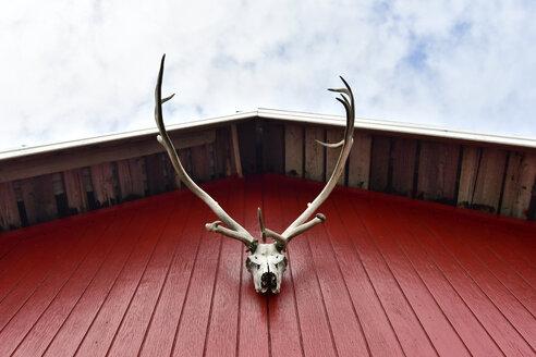 Iceland, deer antler hanging at red facade of frame house - FDF000179