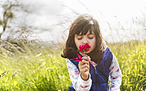 Portrait of little girl smelling red flower - MGOF001930