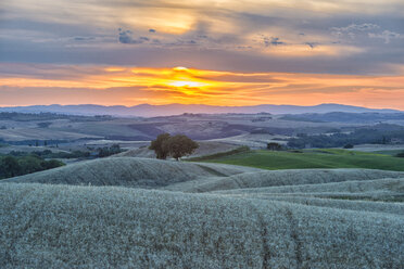 Italy, Tuscany, Val d'Orcia, Fields at sunset - LOMF000301