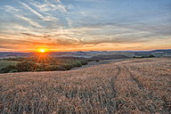 Italy, Tuscany, Val d'Orcia, Fields at sunset - LOMF000304
