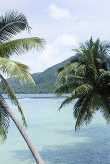 Thailand, Koh Phangan, palm trees on beach - SBOF000028