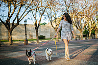 Woman walking her two dogs - KIJF000416