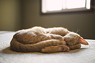Cat sleeping on a bed at home - RAEF001212