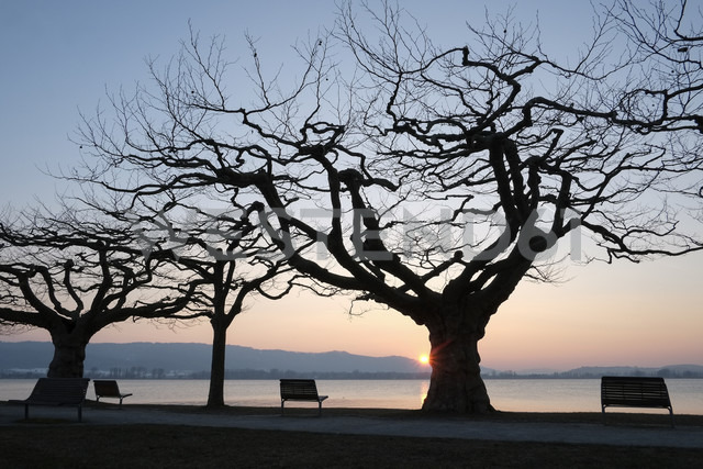 Germany, Lake Constance, benches and trees at sunset on lakeshore - ELF001778