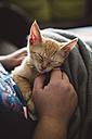 Woman's hand stroking tabby kitten - RAEF001214