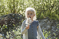 Blond little girl blowing seeds of an umbel into the air - TCF004973