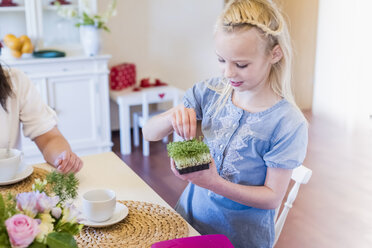 Girl at dining table with cress - MJF001866