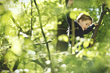 Girl in forest climbing in tree - SBOF000146