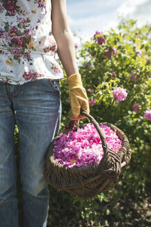 Woman picking rose blossoms - DEGF000838