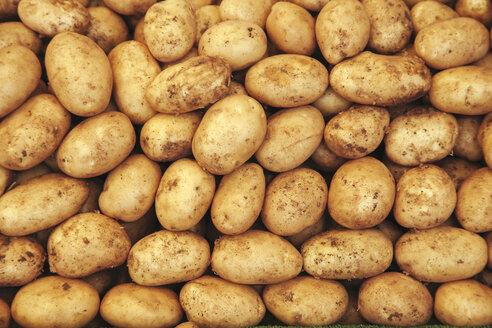 Raw potatoes - BZF000306