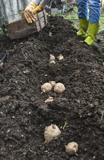 Planting potatoes - DEGF000841