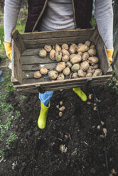 Planting potatoes, wooden box with potatoes - DEGF000844