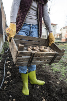 Planting potatoes. wooden box with potatoes - DEGF000847