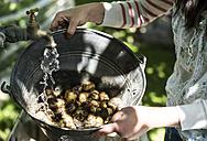Washing fresh harvest potatoes - DEGF000856