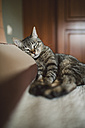 Tabby cat resting on the pillow of the bed - RAEF001236