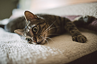 Tabby cat relaxing on the bed - RAEF001239