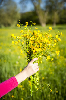 Girl's hand holding bunch of buttercups - SARF002804