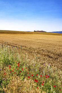 Spain, Andalusia, Field of barley, farmhouse and wind turbines in the background - SMAF000478