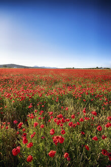 Spain, Andalusia, Villanueva de Trabuco, poppy field - SMAF000496