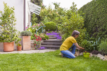 Woman planting marguerite in garden - WDF003677