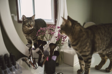 Mirror image of tabby cat standing on vanity - RAEF001259