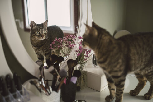 Mirror image of tabby cat standing on vanity - RAEF001259