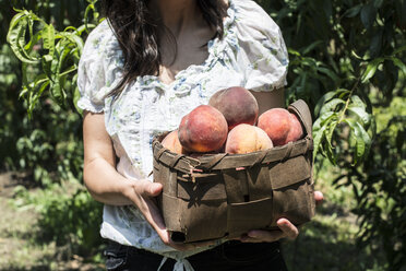 Woman holding basket with peaches in orchard - DEGF000868