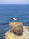 Portugal, Stork nesting at Parque Natural do Sudoeste Alentejano e Costa Vicentina - LAF001667
