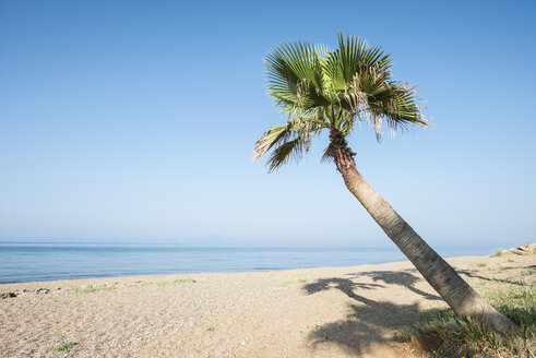 Greece, Glifa, palm tree on the beach - DEGF000891
