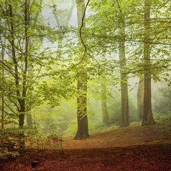 Deciduous forest in spring - DWIF000747