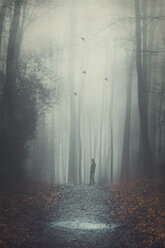 Silhouette of a man on wet forest path, digitally manipulated - DWIF000750