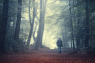 Man walking on forest track in morning light - DWIF000756