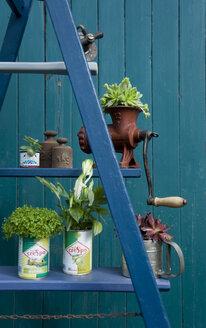 Altes Land, Flower arrangement, ladder with plants, old tap, scoop, mincer - GIS000223