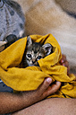 Hands of little boy holding tabby kitten covered with yellow blanket - VABF000661