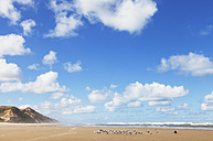 New Zealand, North Island, Northland, Ripiro Beach, Red-billed seagulls and Little Terns - GWF004823