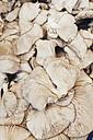 Oyster mushrooms - BZF000315