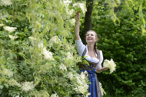 Germany, Bavaria, smiling woman wearing dirndl picking elderflowers - LBF001449