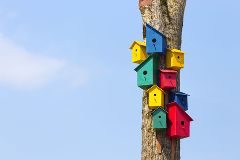 Colorful birdhouses on tree - KNTF000437